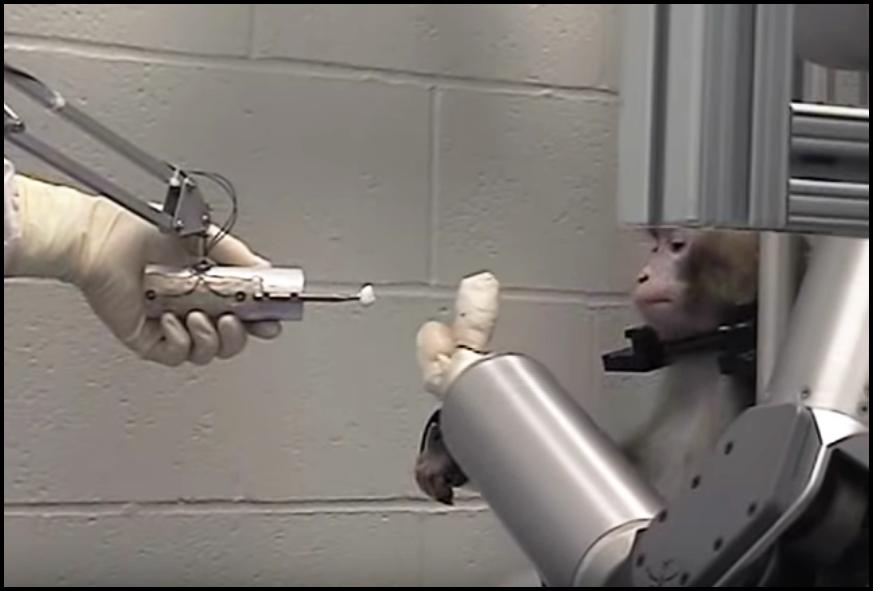 screencap of a monkey feeding itself marshmallows with a robotic arm